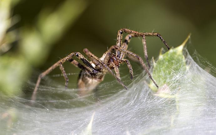 house spider on web