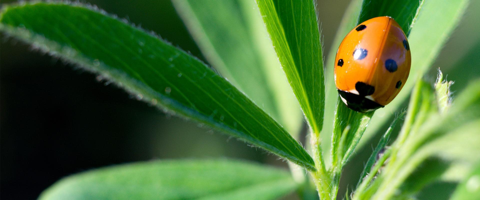 a ladybug crawling on a house plant