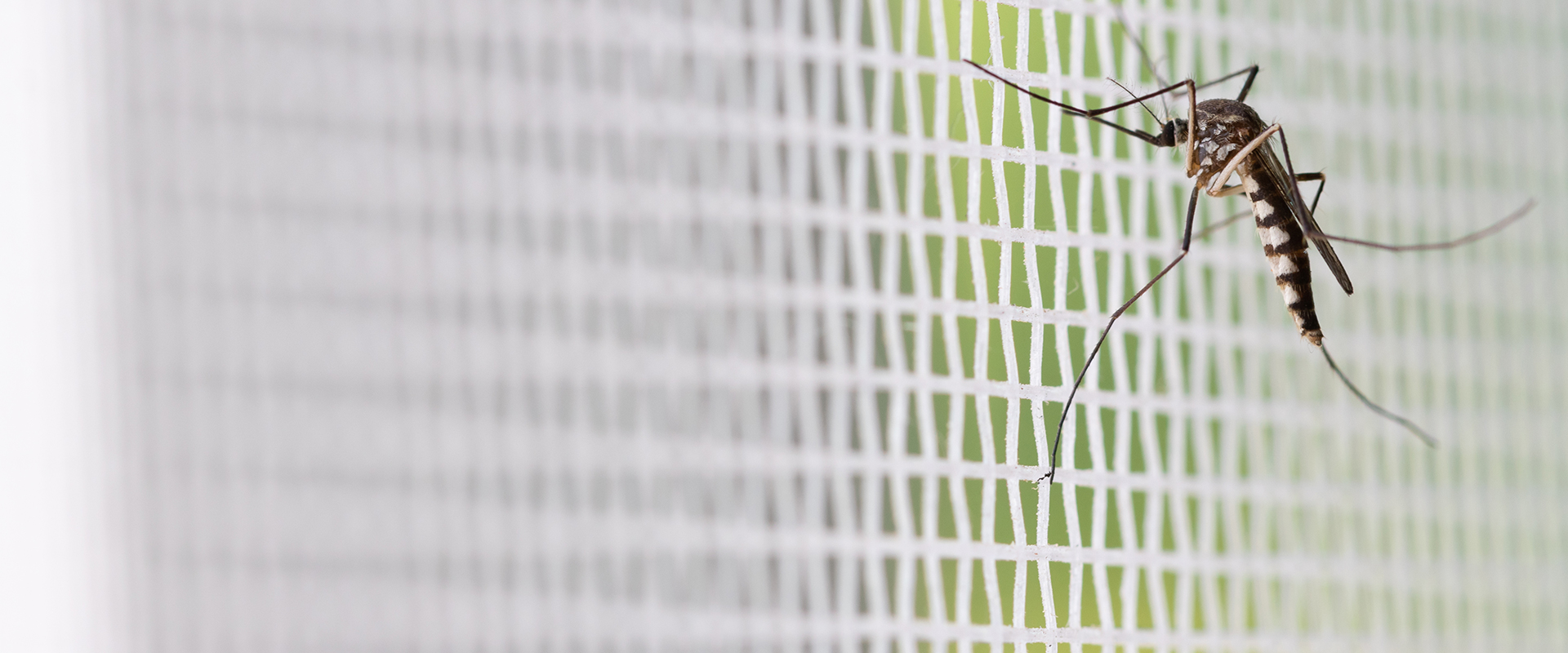 a mosquito on a window screen