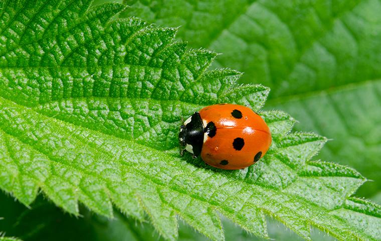 a ladybug on a big leaf