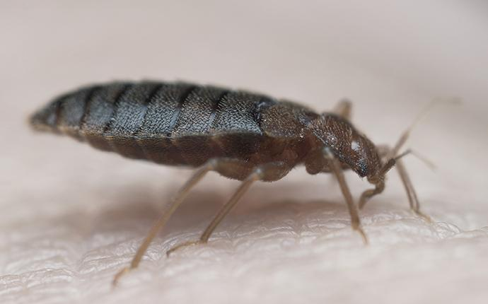 a bed bug on a person in north augusta sc