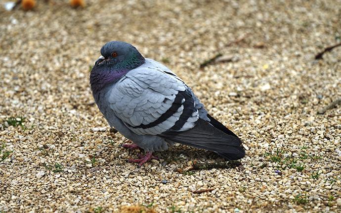 a pigeon on a sidewalk