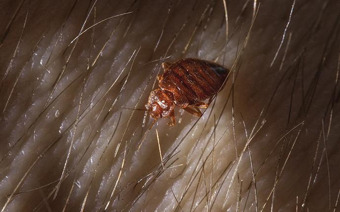 a bed bug on a mans arm at night