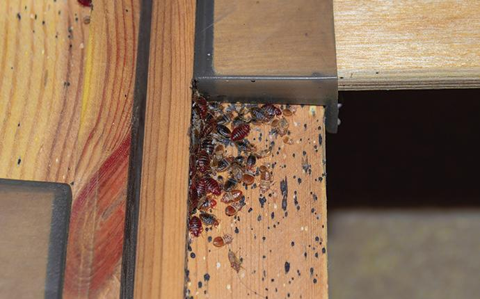 signs of a bed bug infestation on a box spring