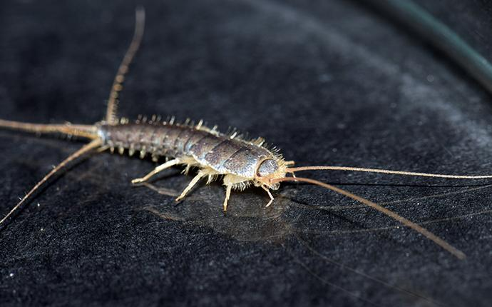 a silverfish in a house