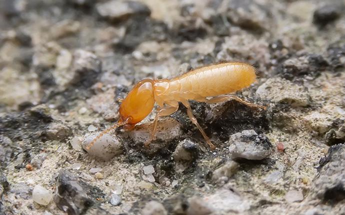 a termite all alone
