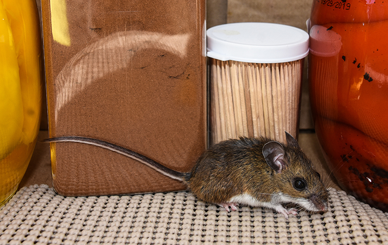a mouse crawling on a surface inside of a home in atlanta georgia