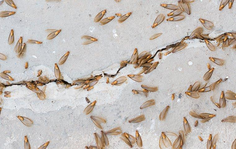 termites swarming through the cracks of a foundation