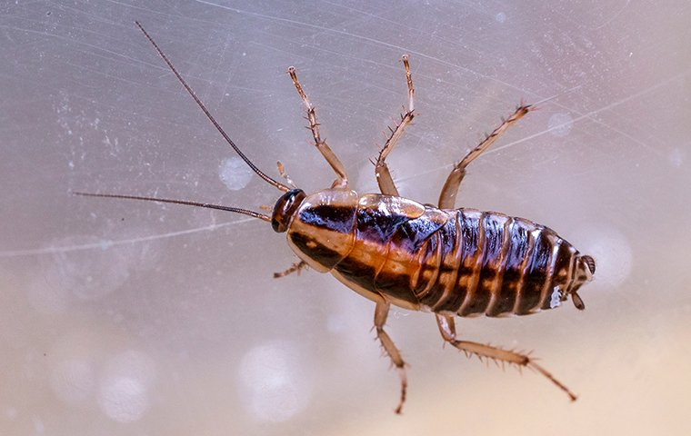 a cockroach crawling on a surface inside of a home