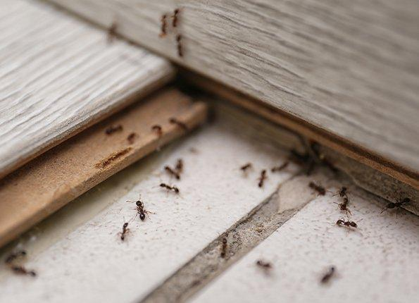 ants crawling on a deck