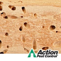 fist signs of a termite infestation