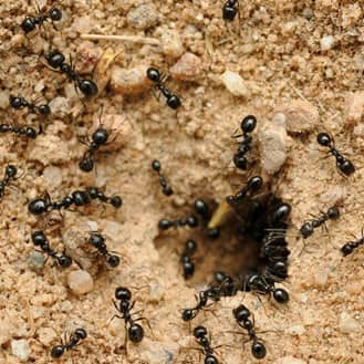 ant colony found in indiana