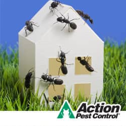how to prevent ants in your indiana home