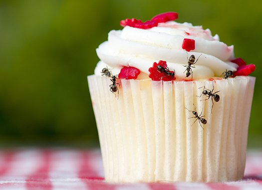 ants on a cupcake at a picnic