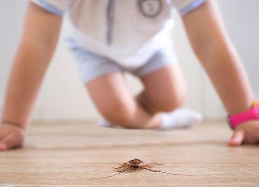 pests effecting asthma and allergy reactions in home
