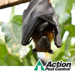 Bats Removal For Indianapolis Businesses