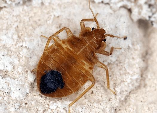 bed bug found in lexington home