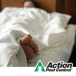 bed bugs in indianapolis
