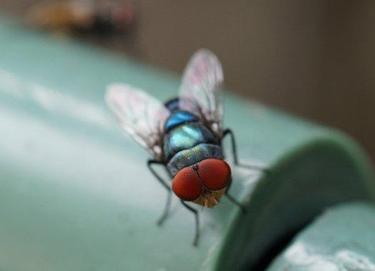 a blow fly on white surface