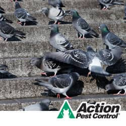 pest birds on the steps of an indiana business