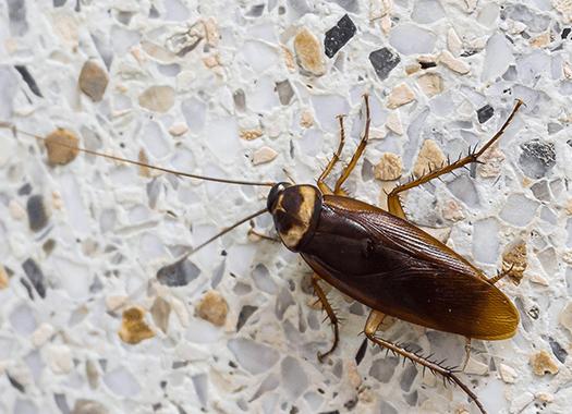 roach on floor