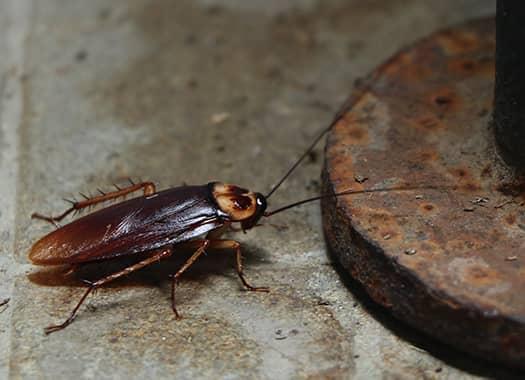cockroach near metal pole