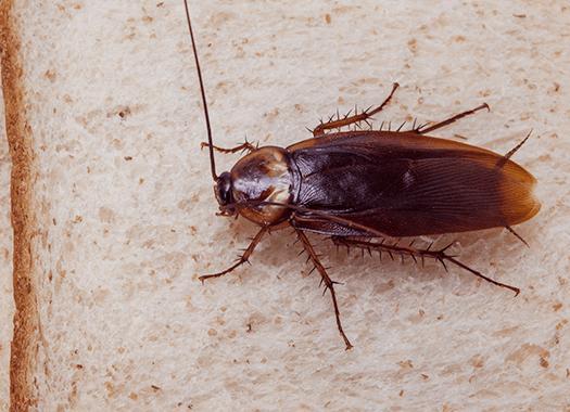 cockroach in terre haute home