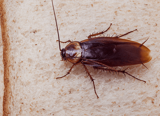cockroach in terre haute home