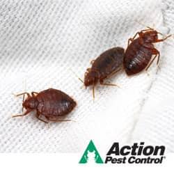 DIY Bed Bug Control Is A Bad Idea