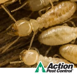 termites located in evansville indiana