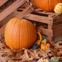 home decorations for fall