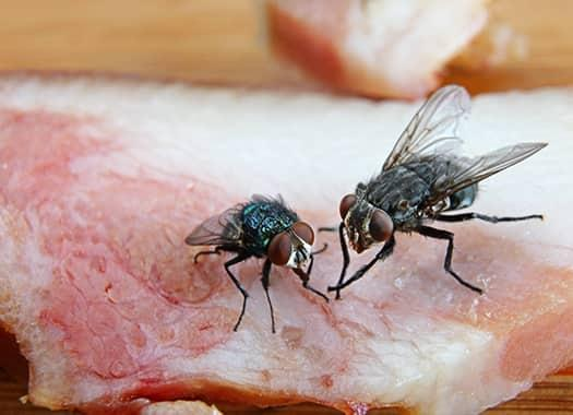 a cluster of flies feasting on a slab of meat in an indianapolis grill
