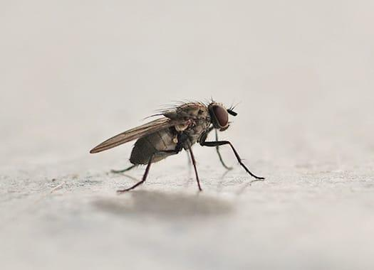 a house fly buzzing around a louisville kitchen