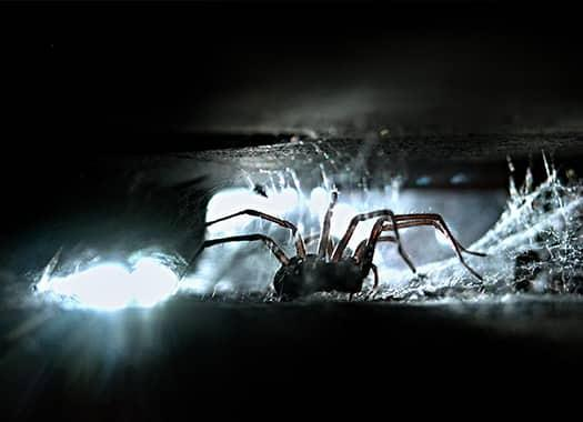a house spider crawling through cracks and crevices of an indianapolis home
