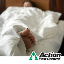 bed bug prevention tips for indiana