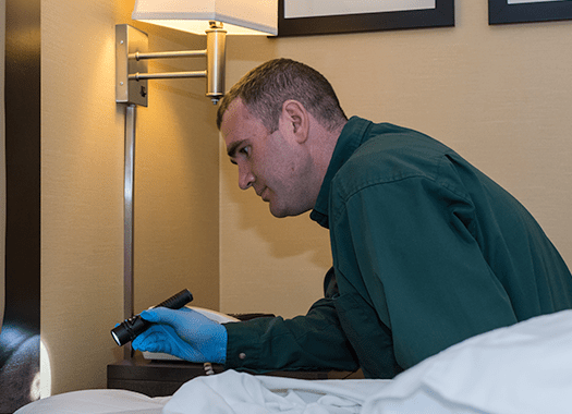 bed bug technician searching for bed bugs