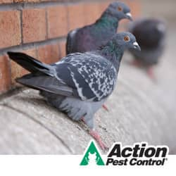 Bird Control In KY and IN