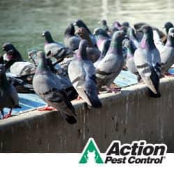pest birds in lexington