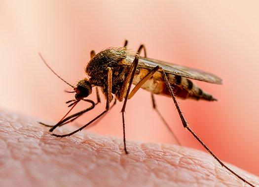 a mosquito biting a persons skin