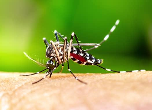 disease carrying mosquito biting on elizabethtown resedents bare skin