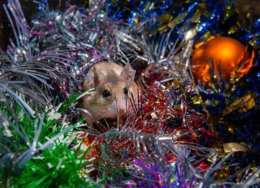 a house mouse scurrying through a storage bin of christmas decorations