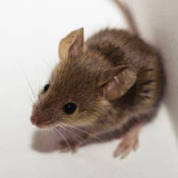 mouse in corner of home