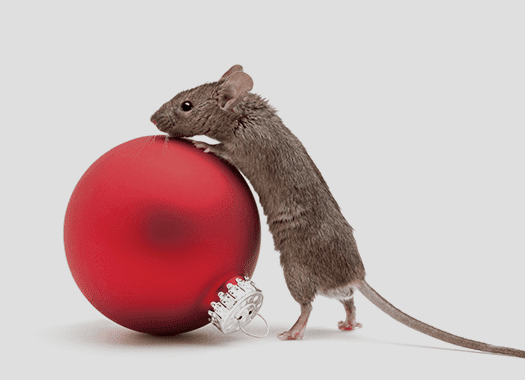 mouse with holiday decoration