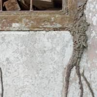foundation with viable termite mud tubes