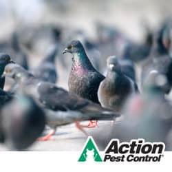 Pest Bird Control Indiana