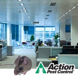 Rodent In Indianapolis Office