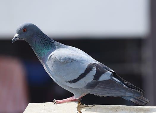 bird sitting on building