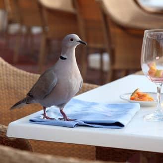 pigeon found at a restaurant