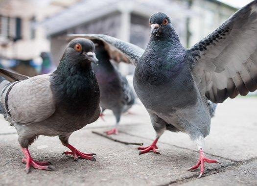 pigeons flocking on a sidewalk