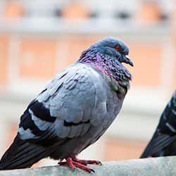 pest bird sitting on ledge of building